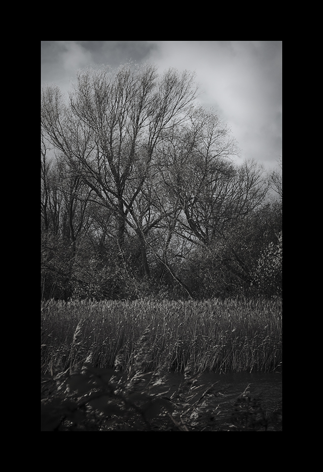 Photography: Reedbeds by Nicholas M Vivian