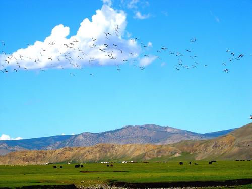 horse green bird crane mongolia herd ger arkhangai tranquililty amarbat