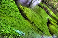 leaf, sunlight, plant, nature, flora, green, vegetation, moss,