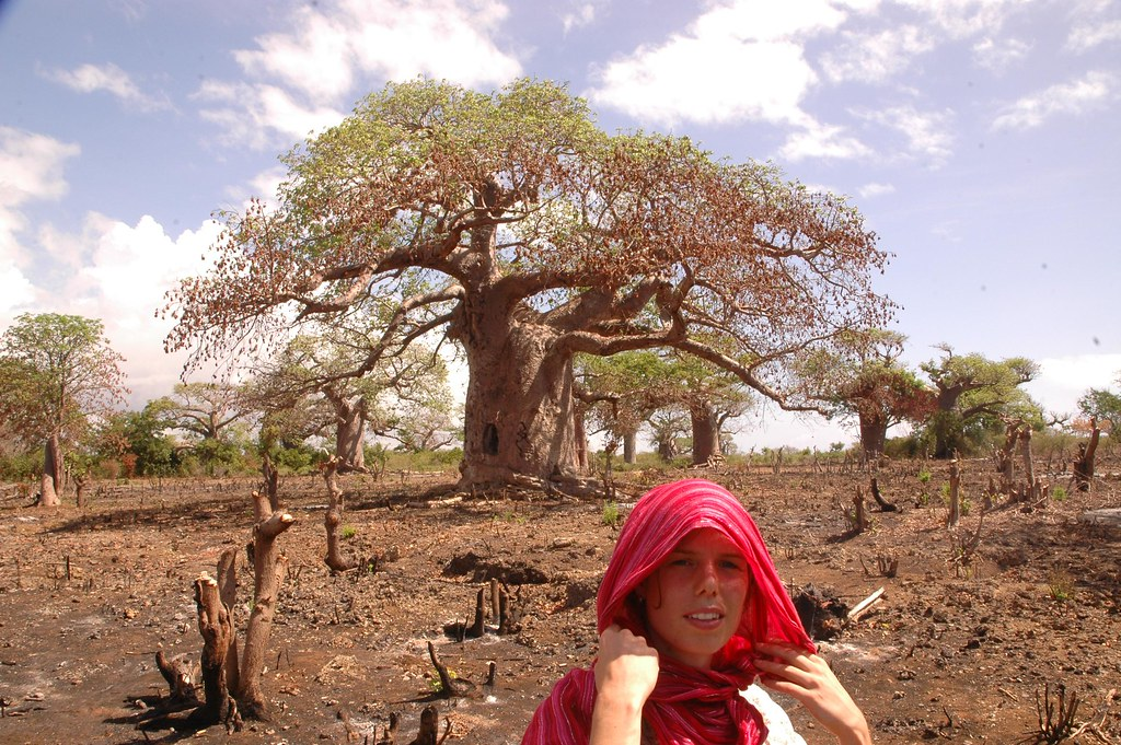 Estelle and the Baobab