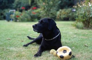 Zeus with ball