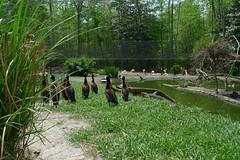 Sylvan Heights Waterfowl Park