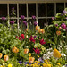 Spring Border Flowers-15825 by BobBauer