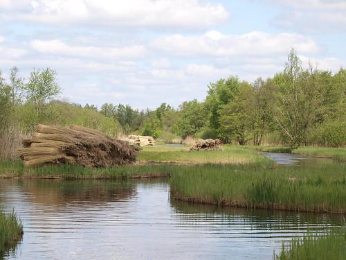 Rietland in de Wieden
