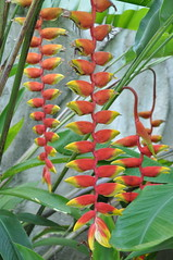 tree(0.0), flower(1.0), leaf(1.0), plant(1.0), flora(1.0), heliconia(1.0),