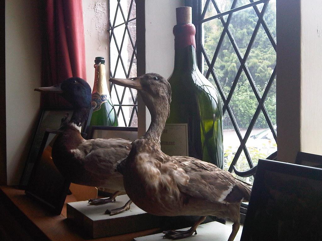 Duckleypluckley