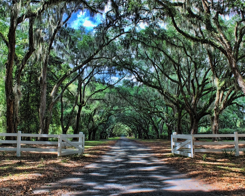 usa fence georgia plantation spanishmoss savannah hdr wormsloe topaz treelinedroad