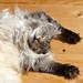 A cat's life by Cajaflez