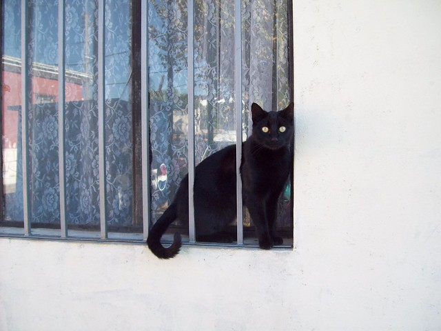 cat, Cerro Alegre