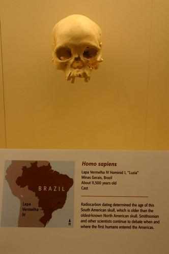 Homo Sapiens 11,500 Years Old