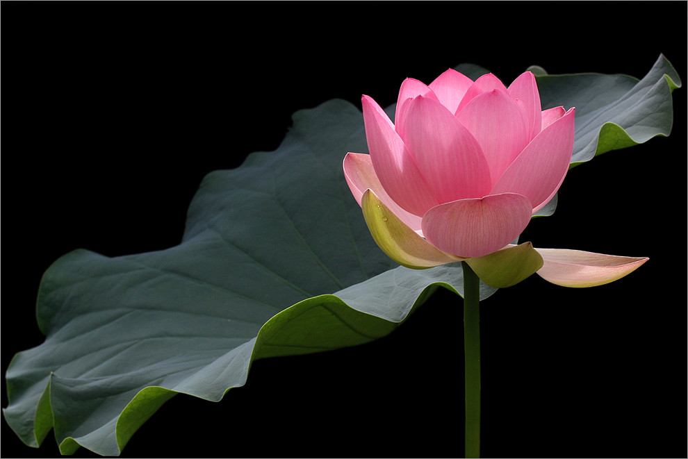 sharing the world together  absolutely fantastic flowers photography by bahman farzad