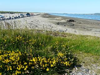 Playa de Clontarf