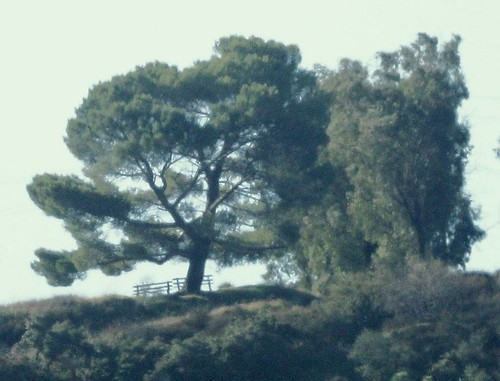 Tree from afar - Verdugo Mountains | Flickr - Photo Sharing!