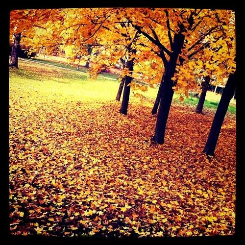 november 1. [fall.]