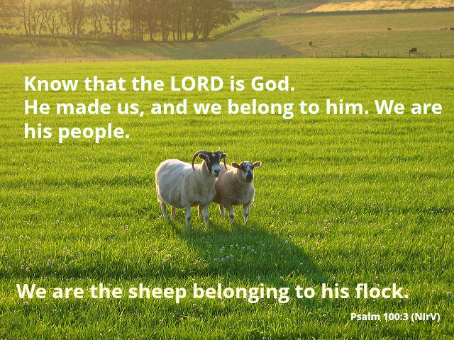the words of Psalm 100:3 with a photo of sheep