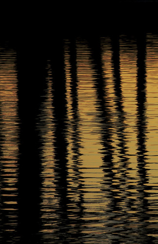 park trees sunset reflection water canon gold golden evening pond sundown dusk ripples 50d canoneos50d