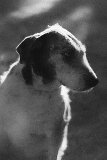 Dog in the Shadows