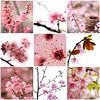 Things i ♥ Thursdays - 07| Spring Bloom... by Bebekk_@