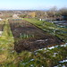 Small photo of Wheatley allotments
