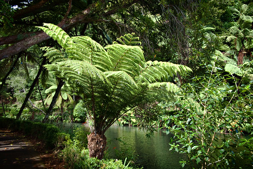 Ferns in the park