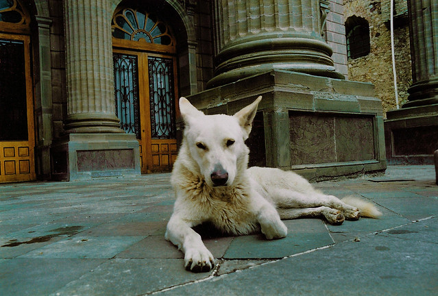 White dog at Teatro Juarez; Guanajuato, Mexico (2000)