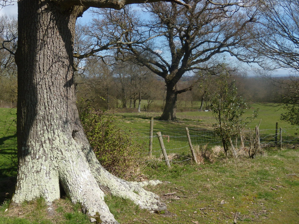 Trees Cowden to Hever