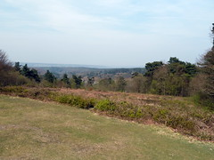 View off Leith Hill