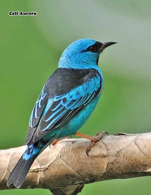 blue ray bans  sa铆-azul     blue