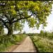 My Morning Walk. by Pat Dalton...
