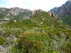 Montée vers Punta Russa : arrivée au plateau 550m et son maquis (démaquisé)