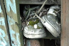 Moss growing on shoes, anti-war protest house, Lake City Way, Seattle, Washington, USA