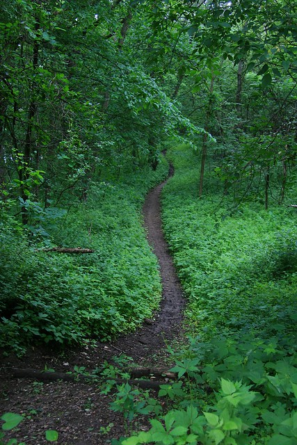 green path into the - photo #39