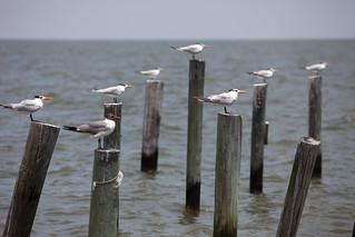 Birds Taking Refuge In the Wind