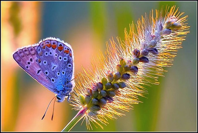Butterfly, by Roberto F.