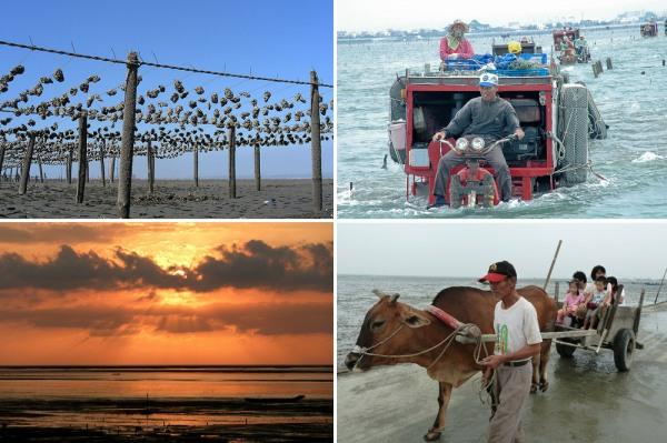 蚵棚、三輪車、夕陽、牛車。無可取代、生生不息的在地產業,是大自然的恩賜。圖片來源:彰化環保聯盟。
