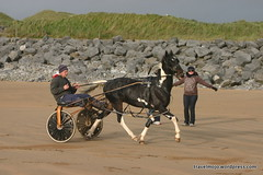 animal sports, equestrianism, horse harness, landscape, harness racing,