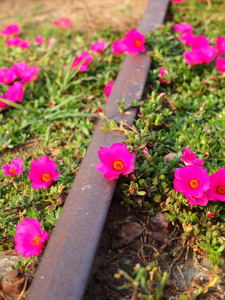 Rails & Flowers