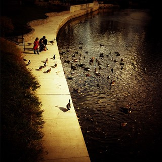 Feeding time #Lomora2 #iphoneography