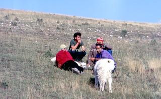 Castel del Monte (AQ), 1994,  Raduno di ovini abruzzesi in località Campo Imperatore.
