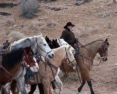 cowboys & cowgirls