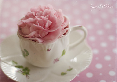 A cup of flower...{11/365}