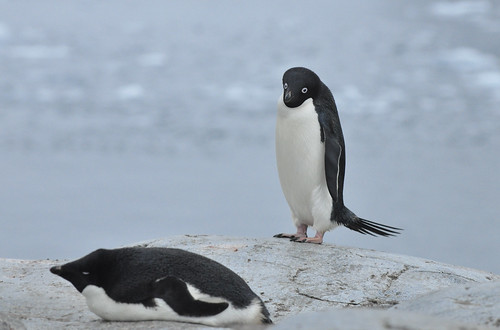 Antartica by Lívia B. Auler