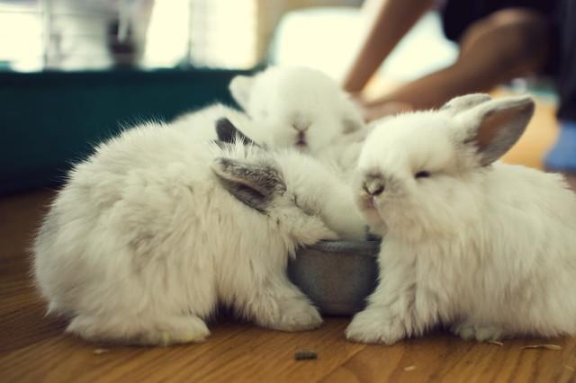 29 - Bunnies!