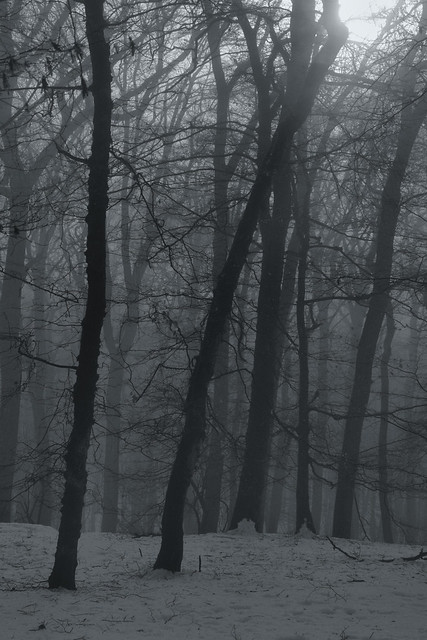 Header of Alone In The Woods