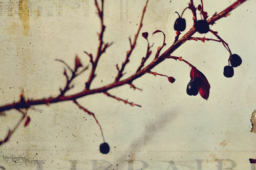 nature's beauty... winter berries