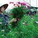 Mùng 8 Tháng 3 by Sơn Marki - Tel: 0924.225.113