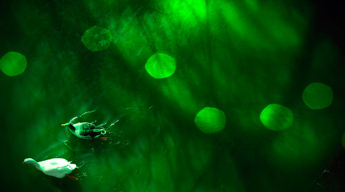 light españa luz water río river spain agua shadows bokeh ducks badajoz sombras guadiana patos extremadura prokofiev azzacov