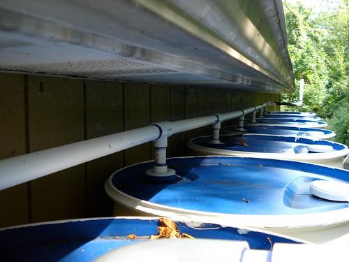 Rain Barrel System