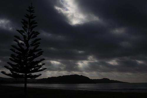 newzealand cloud sun pinetree sunrise gisborne stormclouds waikanaebeach overcastcloud