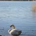 Lago di Varese